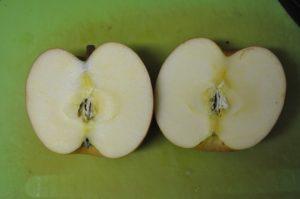 リンゴの断面