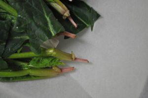 ホウレンソウの根
