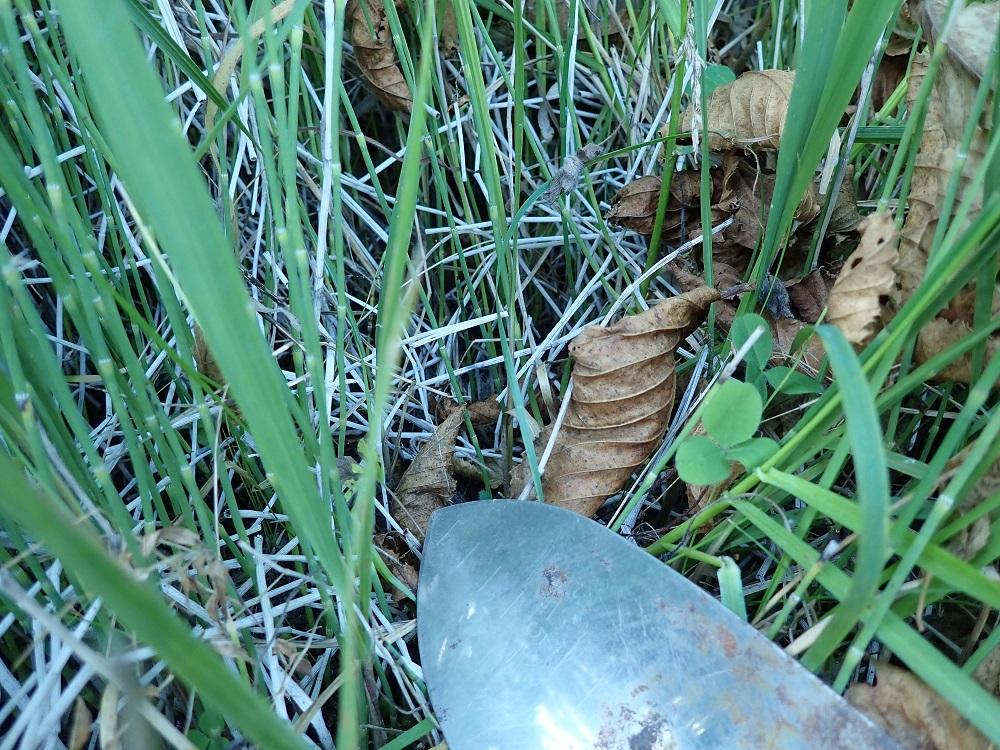 トクサが生い茂る.