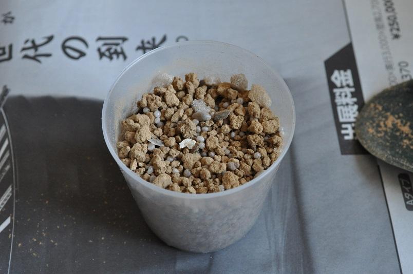 ツルウメモドキ播種3