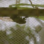 cicada_16.08.27-1