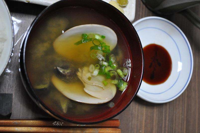 ムラサキインコ、コタマガイの 味噌汁