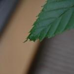 葉から出た水滴