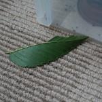 落とされた葉