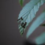 gnoma_15.08.12-2