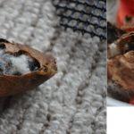 蛹の殻を比べる