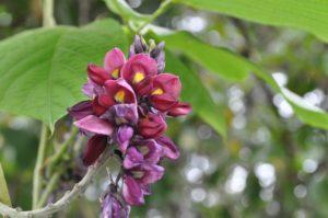 鮮やかな葛の花