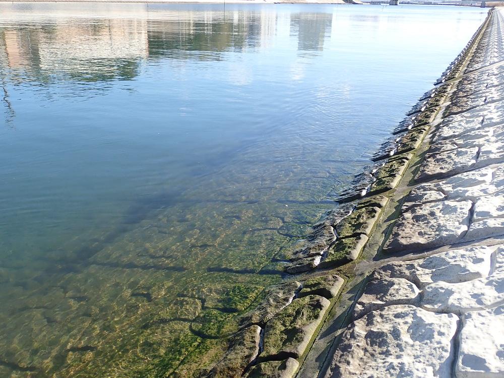 海藻的な群落