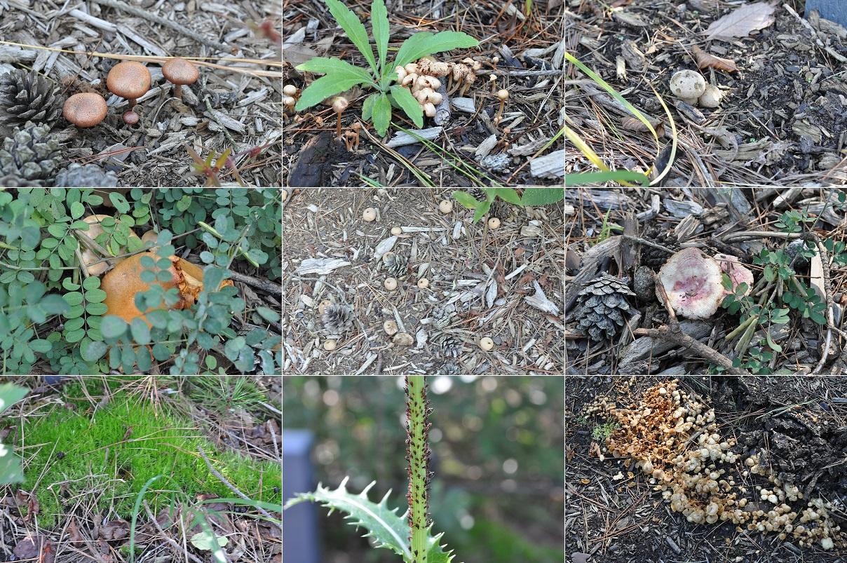 キノコ・植物・虫1