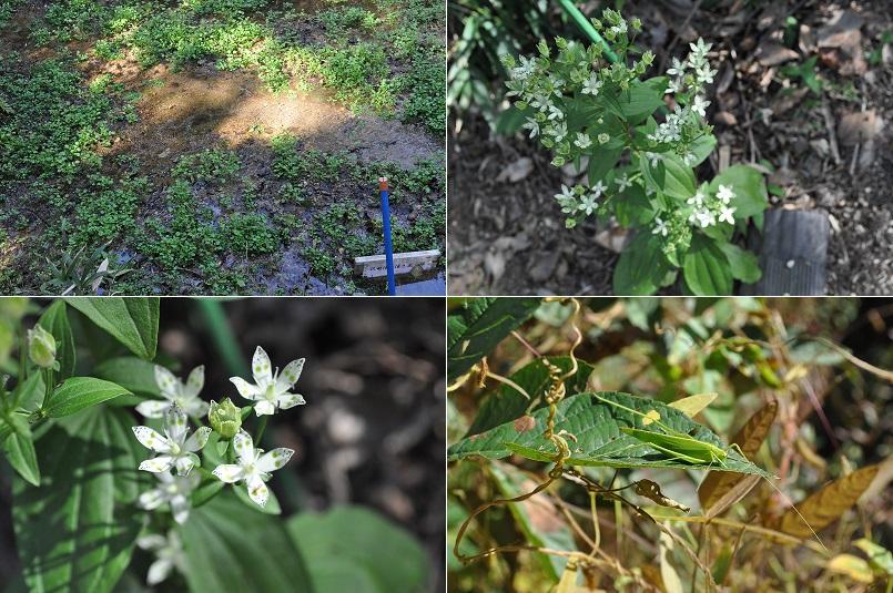 キノコ・植物・3