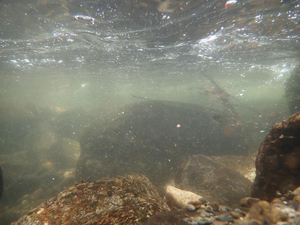 渓流の水中撮影