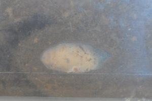 ミヤマクワガタ 多分雄の蛹