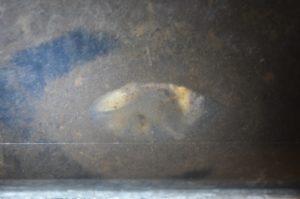 ミヤマクワガタ♂羽化の模様