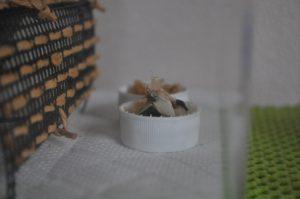 餌場に集るスズムシ