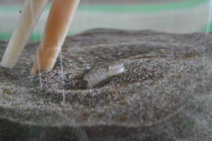 水管を出すハマグリ