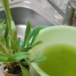 素焼き鉢掃除2
