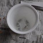 ミルトニオプシス植替4