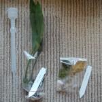 購入した蘭2種