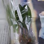 orchids_16.02.14-1