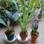 orchids_16.02.14-4