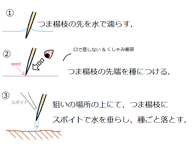 細かい種の蒔き方の図