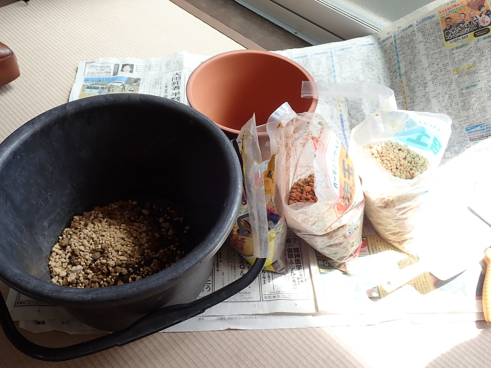 6号鉢に用土をセット