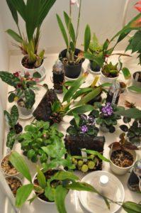 殺ダニ剤を散布した植物ら