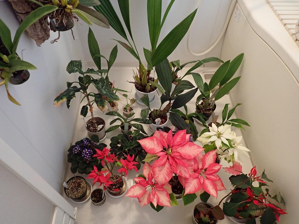 ダニ太郎を散布した植物達
