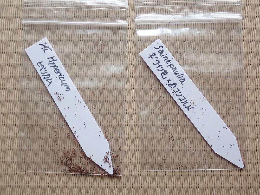 セントポーリアとヒペリカムの種子