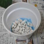 鉢底石を入れる