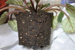 根鉢を改める