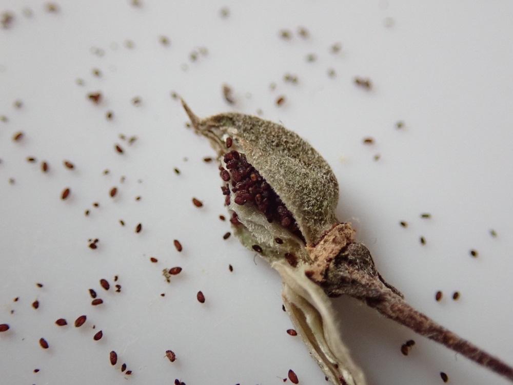 種子がぎっしり