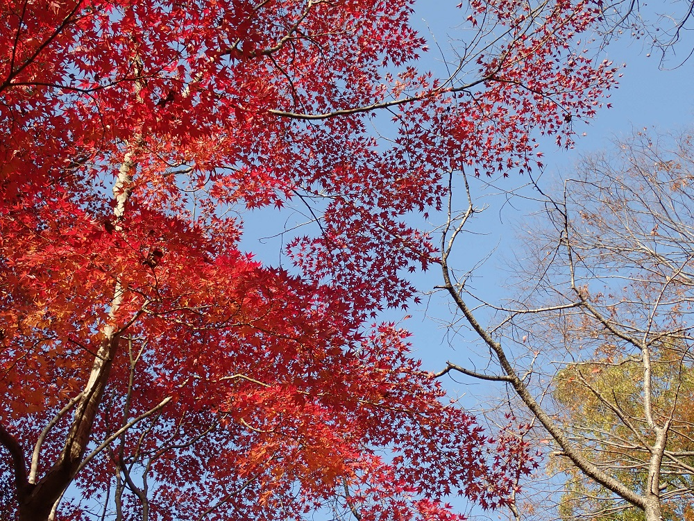 水郷公園の紅葉