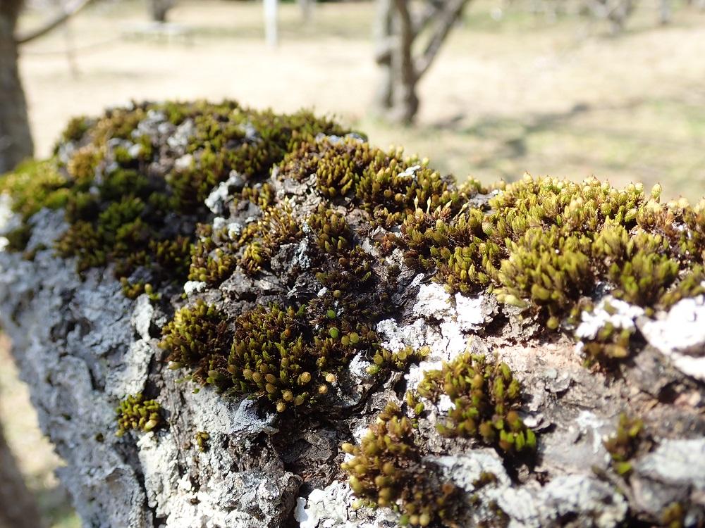 蘚類の苔も多い