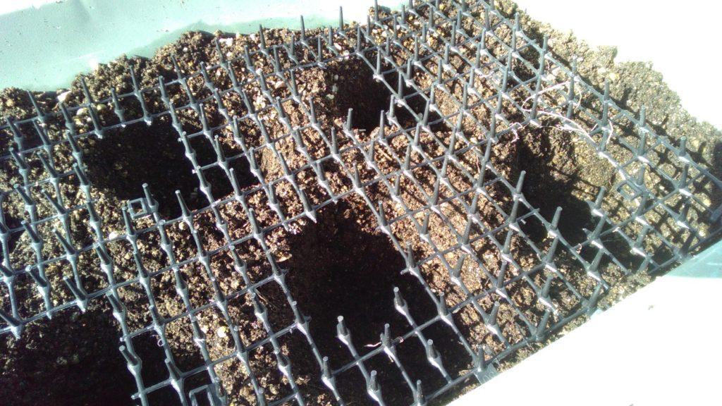 植穴を掘る