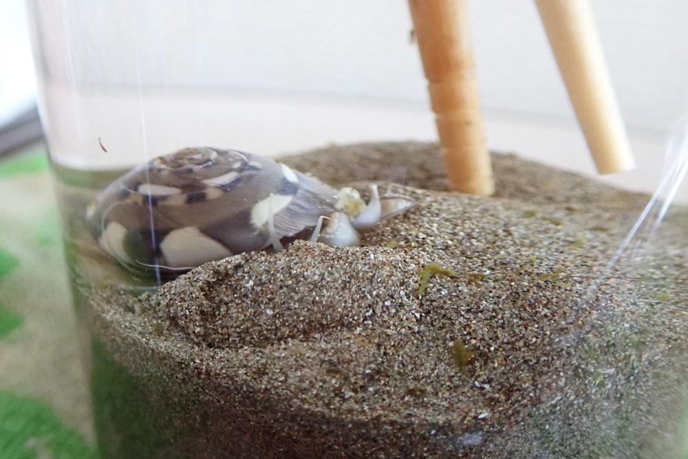 身が砂に埋まり始める