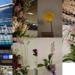 世界らん展2015(1)